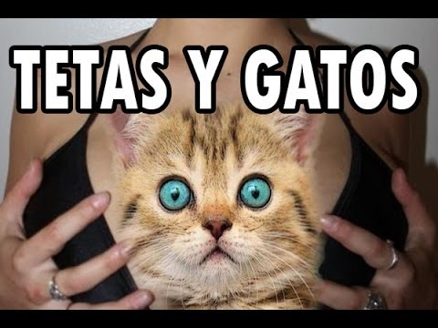 TETAS Y GATOS