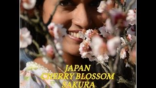 Hikone Japan  city pictures gallery : Japan Sakura | Cycling in Hikone