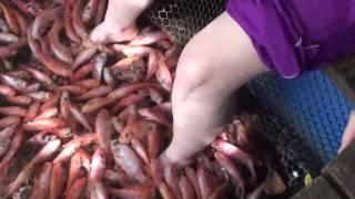 Belinda and the feet bitting fish SriLanka
