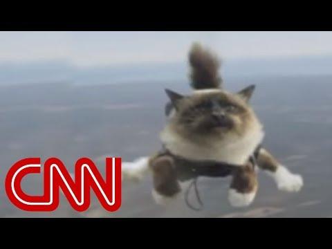 瘋狂極限者竟然帶著貓一起跳傘,網友抨擊:太誇張了