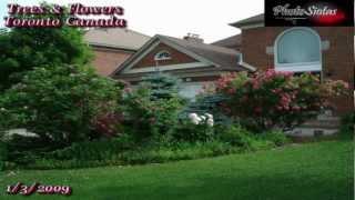 Richmond Hill (ON) Canada  city photos : Richmond Hill, Ontario Tree and Flower.!!!!