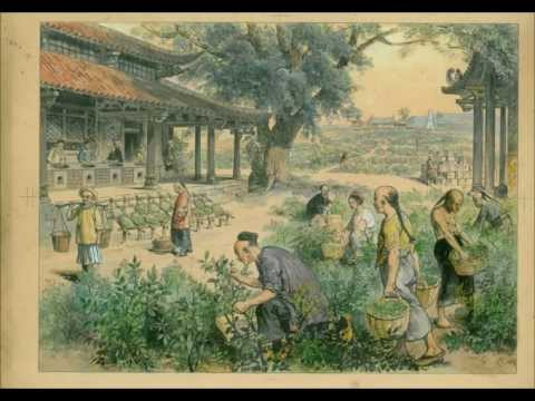 Tea Music - Mountains Of Assam