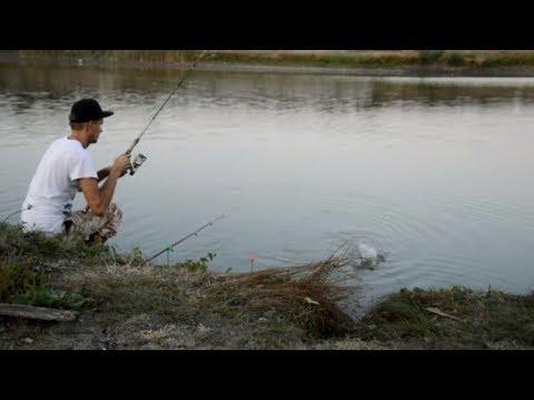 Экшен рыбалка! Говорил, Подсак брать надо!!! Рыбы очень много!