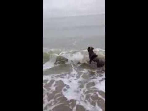 Пес встретил молодого морского котика на пляже)