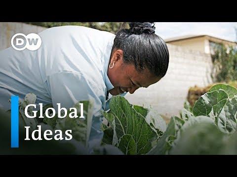 Ecuador: Stadtgärten in Quito helfen gegen den Hunger ...