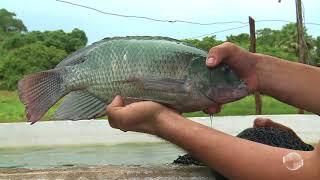 nova-tecnica-permite-criacao-de-peixes-com-economia