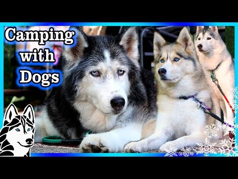 HUSKY CAMPING ADVENTURE MONTAGE | Camping with Dogs | Camping 2017 (видео)