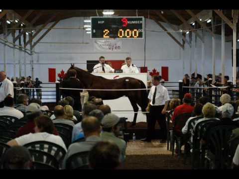 MC Horses  ~~~  Ian Tyson