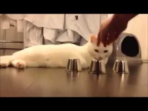 gattino prodigio - la zampa è veloce ma l'occhio di più