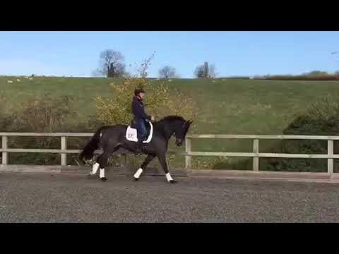 Flat Work Video November 2018
