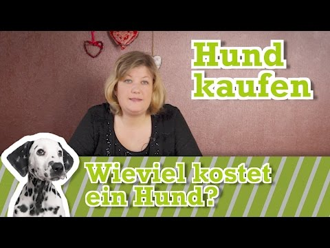 Hund anschaffen: Alle Kosten für Hund und Erstausstattung
