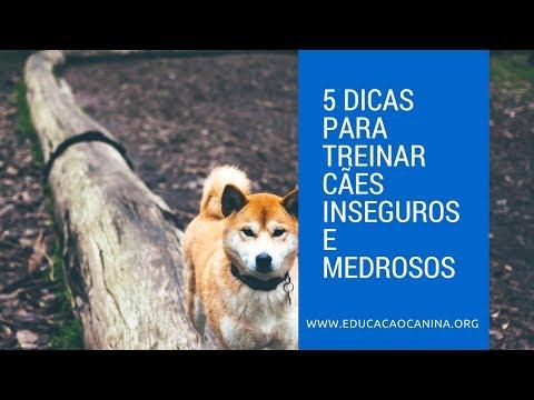Video 5 dicas para treinar cães inseguros e medrosos 🐶🤔 download in MP3, 3GP, MP4, WEBM, AVI, FLV January 2017