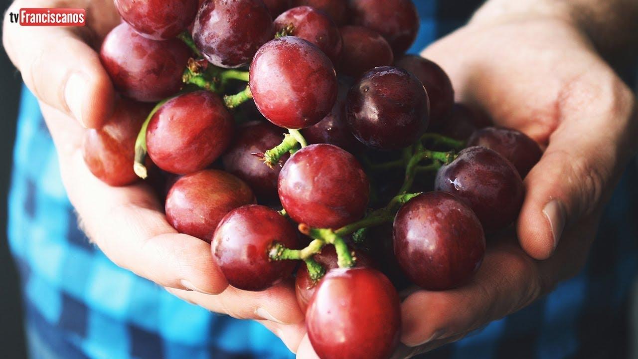 [Palavra da Hora   Nós, com Cristo, produzimos muitos frutos]