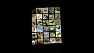 Animals Sound Box PRO YouTube video