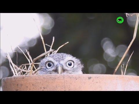 OWLS ARE WEIRDOS - Funny Owls Compilation 😜