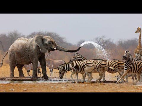 Wild Life - Nature Documentary Full HD 1080p