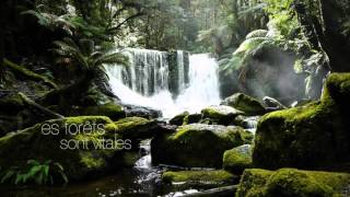 Journée internationale des forêts 2016