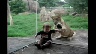 Funny Animal Reactions to Kids at the Zoo. Funny heart warming compilation of Kids and Animals.
