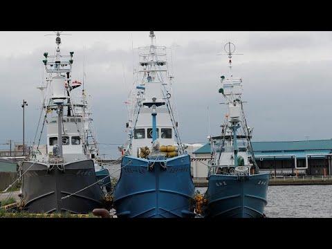 Japan: Kommerzieller Walfang wieder aufgenommen
