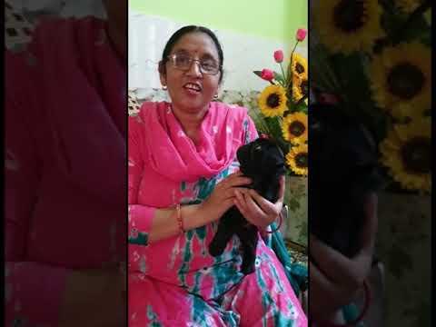 Customer Feedback – Black Pug Dog – Bhola Shola – Contact – 8289088895, 9115496026