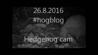 Wildlife Trail Camera - 26.8.2016