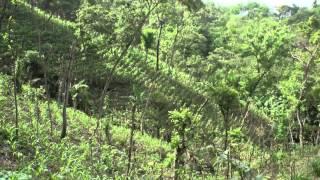 Honduras Quesungual System
