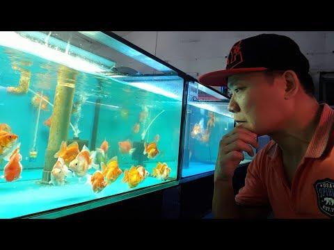 LIOW VIDEO: Rainbow Aquarium Pte Ltd (Part 2/3) ?????_Akvárium. Heti legjobbak