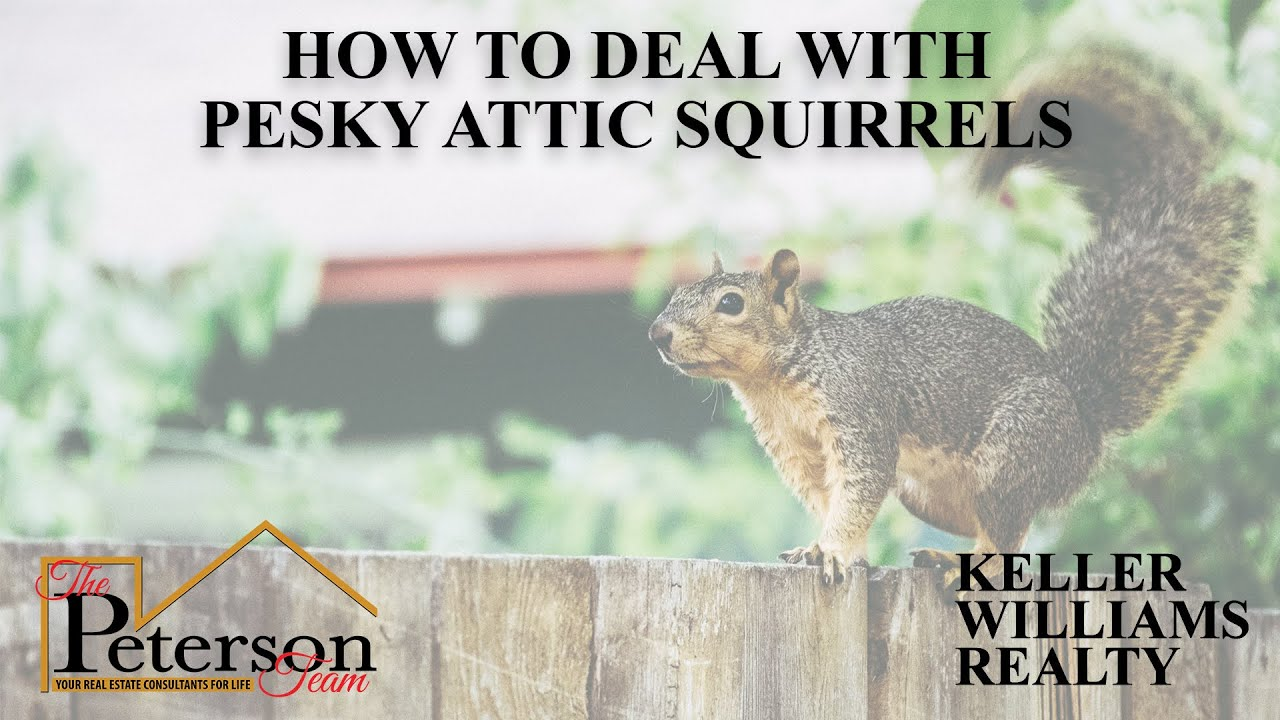 Advice for Dealing With Squirrel Problems in Your Home