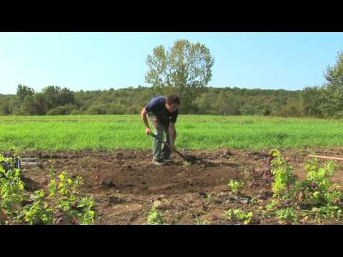 Vegetable Gardening : How to Build a Raised Garden Bed