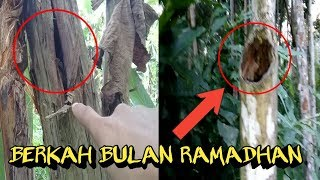 Video Tak Di Sangka-Sangka Ngabuburit Di Hutan dapat 2 Sarang Hewan ini MP3, 3GP, MP4, WEBM, AVI, FLV Mei 2018