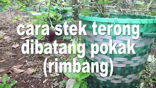 Video CARA STEK TERONG DI BATANG POKAK AGAR BERBUAH TERUS MP3, 3GP, MP4, WEBM, AVI, FLV November 2018