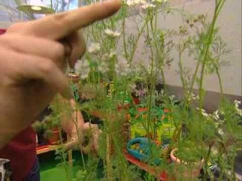 Utilisima jardinera en casa utilisima luz en casa for Bricoman wikipedia