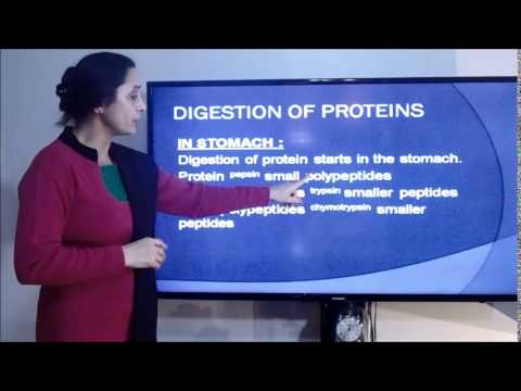DIGESTION OF CARBOHYDRATES, PROTEINS, FATS AND LIPIDS
