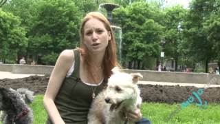 Caring For Your Dog - Summer Preparation