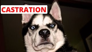 Your Dog Knows Exactly What You're Saying by Did You Know Animals?