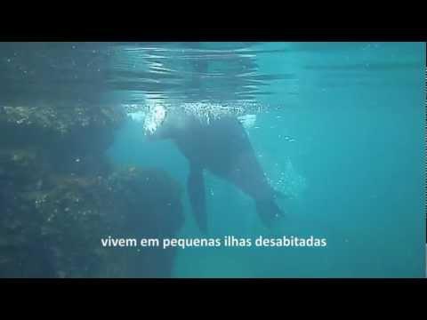 Nadando com Lobos-Marinhos