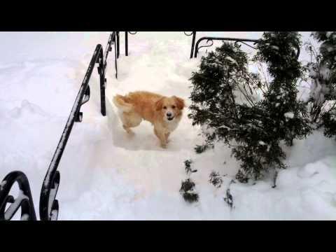 Söt hund i djupsnö
