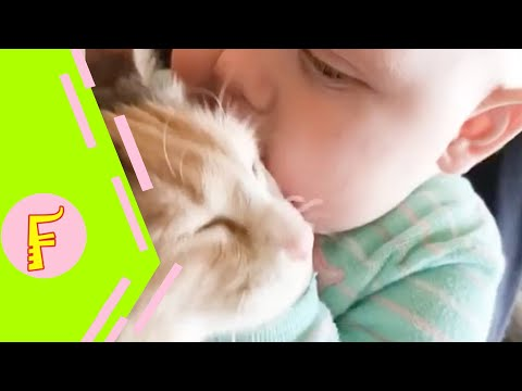 Baby and Cat Fun and Fails - Funny Baby Video - Thời lượng: 11:35.