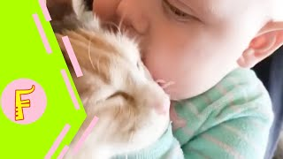 Video Baby and Cat Fun and Fails - Funny Baby Video MP3, 3GP, MP4, WEBM, AVI, FLV Januari 2019