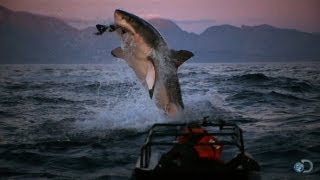 What are your favorite moments from Shark Week? Your favorites from Discovery take a look back at the past quarter of a century of Shark Week.  For more Sha...