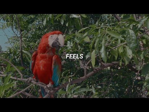 Calvin Harris - Feels (feat. Pharrell Williams, Katy Perry, Big Sean) // Traducida al Español