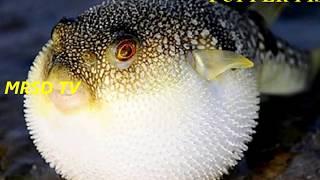 Top 12 Most  Dangerous Animals in the Ocean! 12  Dangerous Animals Ocean In The World #12