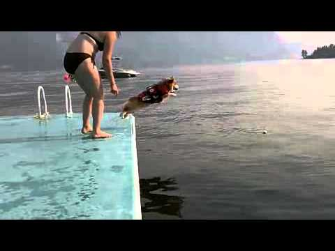 CUTE: Dog belly flop and dog jumps with excitement for a walk!
