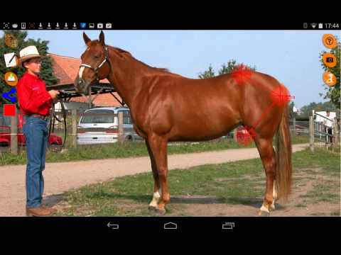 Video of Horse Conformation