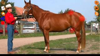 Horse Conformation YouTube video