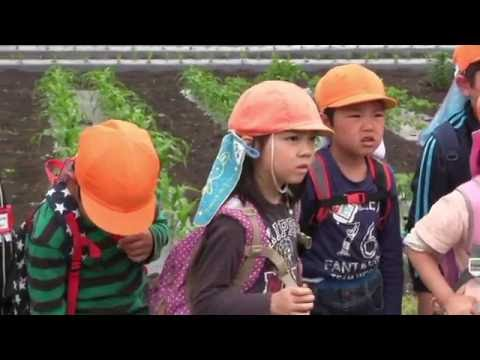 サツマイモ大きくな〜れ! 杉の子保育園