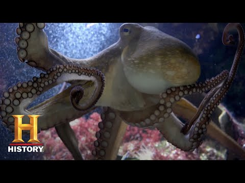 Ancient Aliens: THE OCTOPUS FROM OUTER SPACE (Season 12) | Exclusive | History