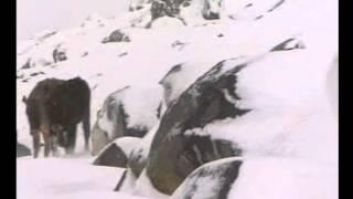 ardahan çildir belgeseli