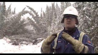 Restoring caribou habitat