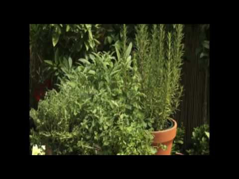 Grow Herbs in Pots
